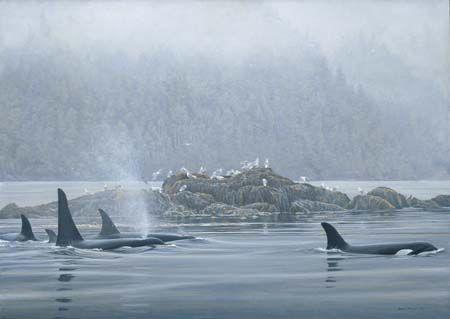 """Robert Bateman Handsigned and Numbered Limited Edition Renaissance Canvas Giclee:""""Orca Procession"""""""