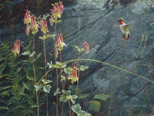 """Robert Bateman Handsigned and Numbered Limited Edition Renaissance Giclee on Canvas: """"Ruby Throat and Columbine"""""""