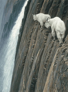 """Robert Bateman Handsigned and Numbered Limited Edition Renaissance Giclee on Canvas:""""SHEER DROP - MOUNTAIN GOATS"""""""
