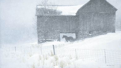 """Robert Bateman Handsigned and Numbered Limited Edition Renaissance Giclee on Canvas:""""SHELTER"""""""