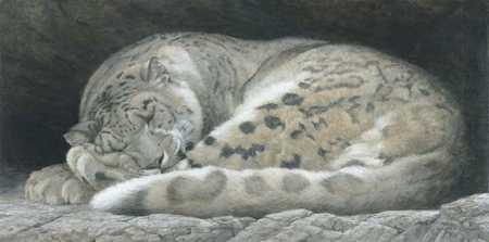 """Robert Bateman Handsigned and Numbered Limited Edition :""""Sleeping - Snow Leopard """""""
