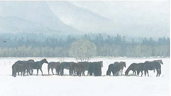 """Robert Bateman Handsigned and Numbered Limited Edition:""""Winter Gathering – Horse Herd """""""