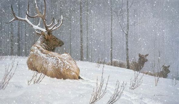 "Robert Bateman Handsigned & Numbered Limited Edition Canvas Giclee:""Evening Snowfall - American Elk"""