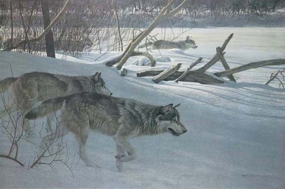 """Robert Bateman Handsigned & Numbered Limited Edition Canvas:""""Wolfpack In Moonlight"""""""