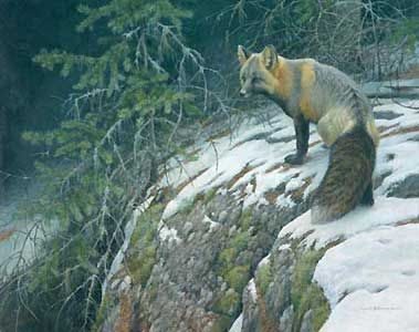 """Robert Bateman Handsigned & Numbered Limited Edition Giclee on Canvas:""""Fox Crossing"""""""