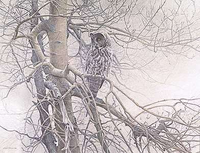 """Robert Bateman Handsigned & Numbered Limited Edition Giclee on Canvas:""""Ghost of the North - Great Gray Owl"""""""