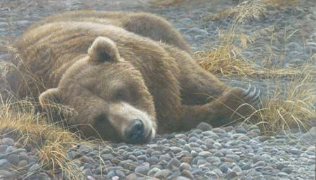 """Robert Bateman Handsigned & Numbered Limited Edition Giclee on Canvas:""""Grizzly at Rest"""""""