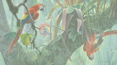 """Robert Bateman Handsigned & Numbered Limited Edition Giclee on Canvas:""""Scarlet Macaws """""""