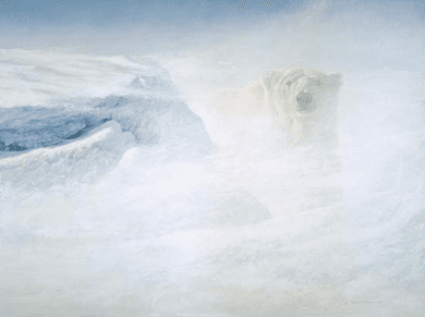 """Robert Bateman Handsigned & Numbered Limited Edition Giclee on Canvas:""""White Encounter"""""""
