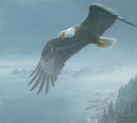 "Robert Bateman Handsigned & Numbered Limited Edition:""On The Wing - Bald Eagle"""