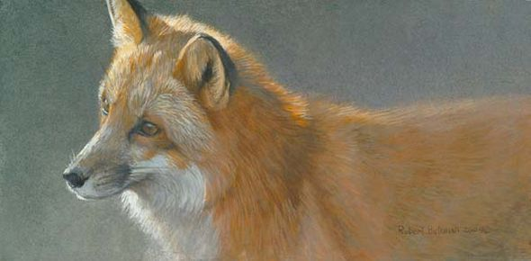 "Robert Bateman Handsigned & Numbered Limited Edition Print:""Questing Red Fox"""