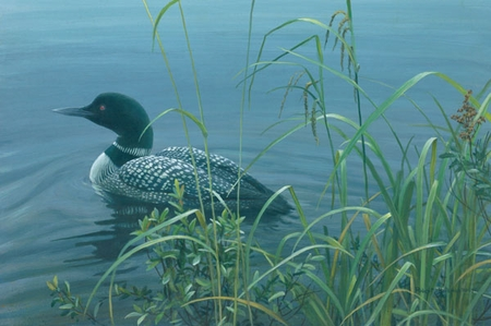 "Robert Bateman Handsigned & Numbered Limited Edition Print:""Shoreline - Common Loon"""