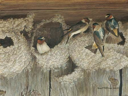 """Robert Bateman Handsigned & Numbered Limited Edition Print:""""Under Construction - Cliff Swallows"""""""