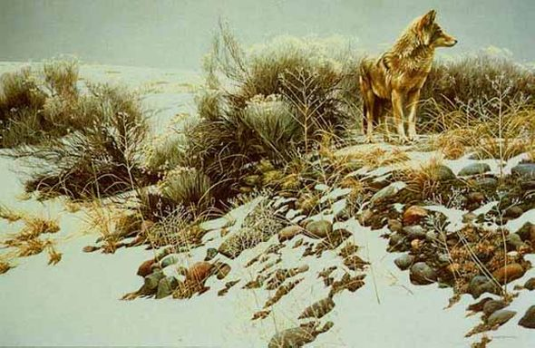 """Robert Bateman Handsigned & Numbered Renaissance Edition Giclee on Canvas: """"Coyote in Winter Sage"""""""