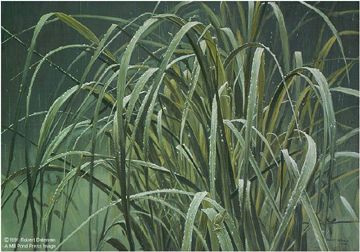 "Robert Bateman Limited Edition Paper Print:""Beach Grass And Tree Frog"""