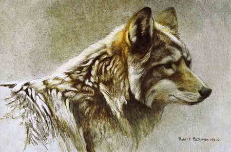 "Robert Bateman Limited Edition Paper Print:""Coyote Head Study"""