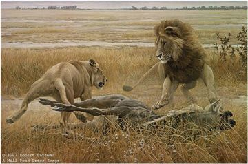 "Robert Bateman Limited Edition Paper Print:""Dispute Over Prey"""