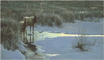"Robert Bateman Limited Edition Paper Print:""Evening Light - Elk"""