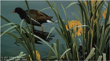 "Robert Bateman Limited Edition Paper Print:""Gallinule Family"""
