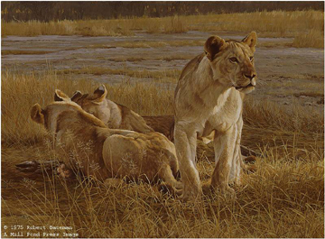 "Robert Bateman Limited Edition Paper Print:""Lions At Dawn"""