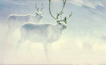 "Robert Bateman Limited Edition Paper Print:""Peary Caribou"""