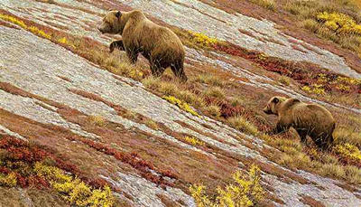 "Robert Bateman Limited Edition Print: ""Alaskan Autumn"""
