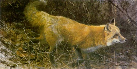 """Robert Bateman Limited Edition Print: """"On The Move - Red Fox"""""""