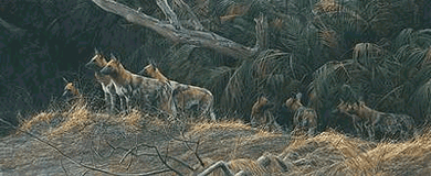"Robert Bateman Limited Edition Print: ""Painted Dogs"""