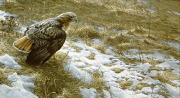 """Robert Bateman Limited Edition Print:""""Spring Thaw-Red-Tailed Hawk"""""""