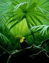 "Robert Bateman Limited Edition Print:""Under The Canopy-Toucan"""