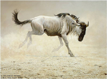 "Robert Bateman Limited Edition Print:""Wildebeest"""