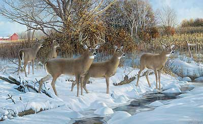 """Ron Van Gilder Handsigned and Numbered Limited Edition Print: """"Early Snow-Whitetail Deer"""""""