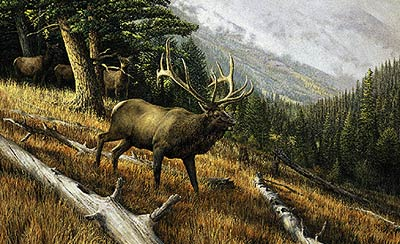 """Ron Van Gilder Limited Edition Print:""""A Challenge to All-World Record Elk"""""""