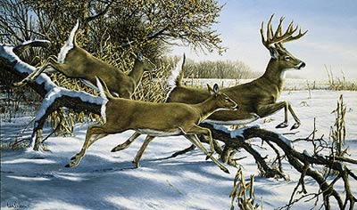 "Ron Van Gilder Limited Edition Print:""Breaking Cover-Whitetail Deer"""