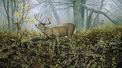 "Ron Van Gilder Limited Edition Print:""Monarch's Morning-Deer"""