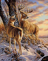"""Rosemary Millette Artist Proof Limited Edition Print:""""Twilight Escapade-Whitail Deer"""""""