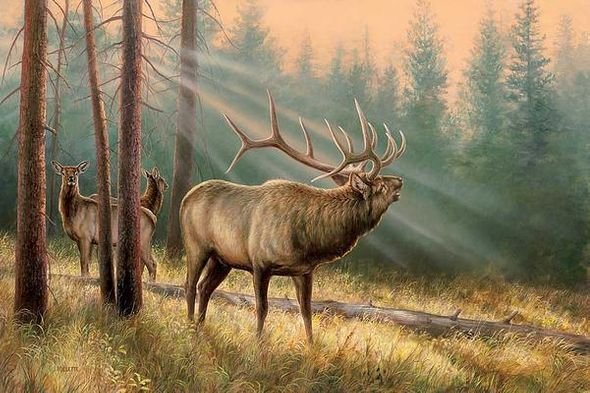"""Rosemary Millette Hand Signed and Numbered Limited Edition Print:""""Answering the Call-Elk"""""""