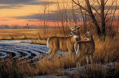 """Rosemary Millette Limited Edition Artist Proof Print:""""Daybreak-Whitetail Deer"""""""