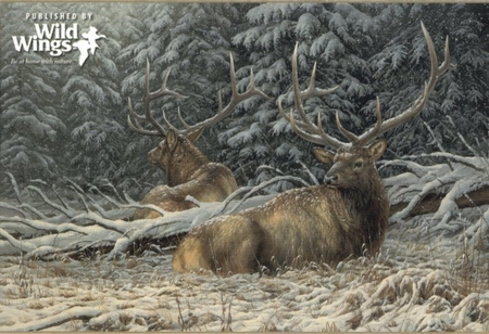"""Rosemary Millette Signed and Numbered Limited Edition Artist Proof Print: """"Sheltered Elk"""""""