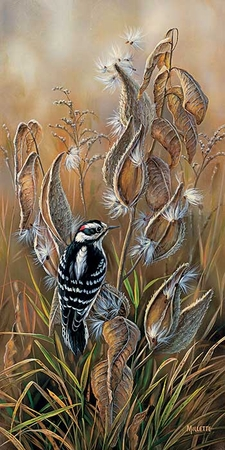 """Rosemary Millette Handsigned & Numbered Limited Edition Print:""""Downy Woodpecker"""""""