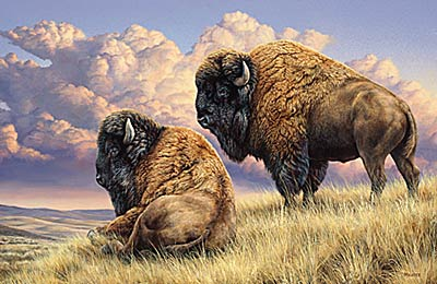 "Rosemary Millette Limited Edition Artist Proof Print:"" Prairie Monarchs-Bison """