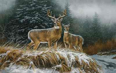 """Rosemary Millette Limited Edition Artist Proof Print: """"In the Storm-Whitetail Deer"""""""