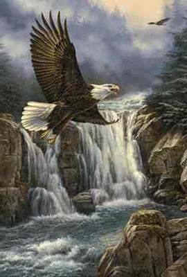 """Rosemary Millette Limited Edition Print: """"Majestic Flight-Bald Eagle"""""""