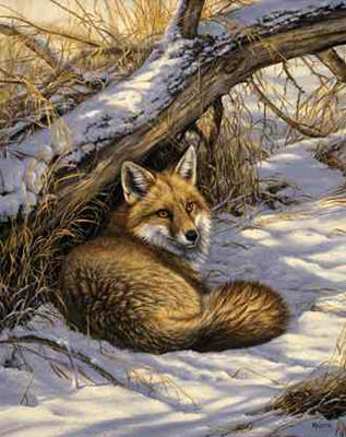 """Rosemary Millette Limited Edition Print: """"Restful Moment-Red Fox"""""""