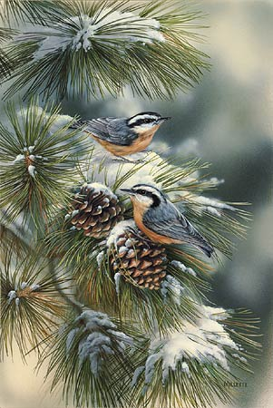 """Rosemary Millette Limited Edition Print: """"Winter Gems-Nuthatch"""""""