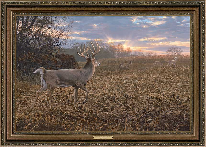 Junior Whitetail Deer Print by Scot Storm