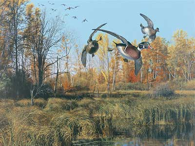 """Scot Storm Handsigned and Numbered Limited Edition:""""Backwater- Wood Ducks"""""""