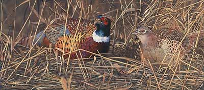 "Scot Storm Handsigned and Numbered Limited Edition ""Harvest Duo-Pheasants"""