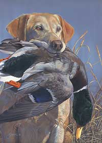 """Scot Storm Handsigned and Numbered Limited Edition Print: """"Prize Possession-Yellow Lab"""""""