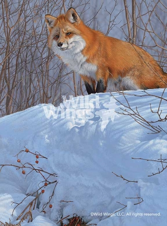 "Scot Storm Handsigned and Numbered Limited Edition Print: ""Winter's Red - Red Fox"""